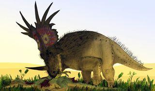 A-bristly-Styracosaurus-d-001