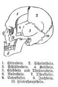 402px-Human_skull_with_german_legend