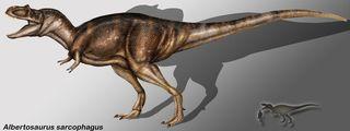 Albertosaurus_sarcophagus_copia