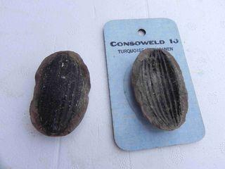Mazon Creek Seed