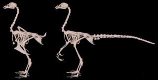 Chicken_Chickenosaurus