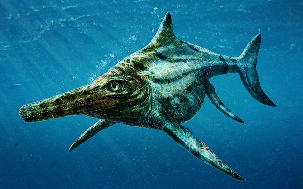 Shawcross-dolphin_3161128b