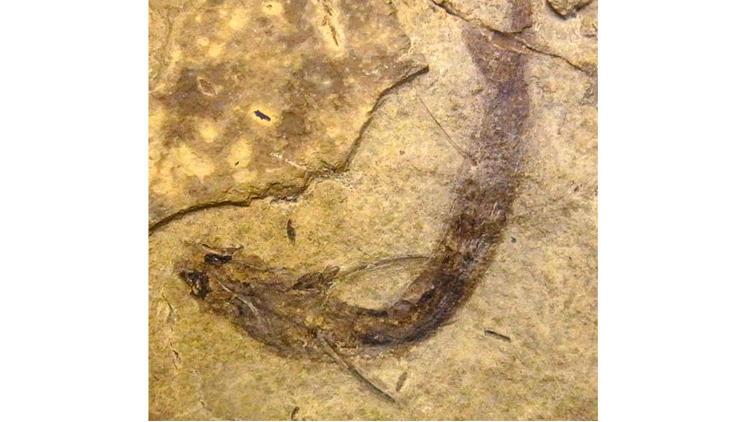 La-sci-sn-fossilized-fish-rods-cones-20141223-003