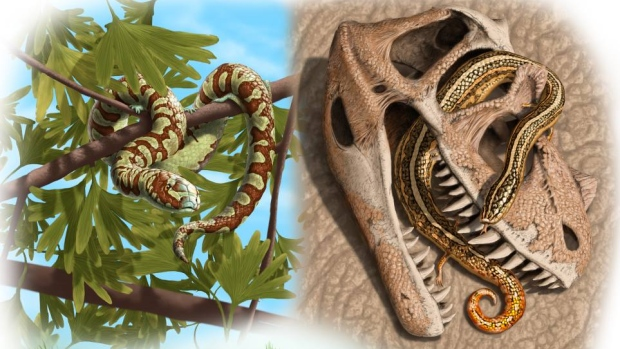 Ancient-snakes