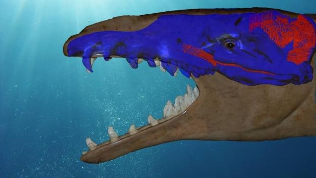 Basilosaurus-bite