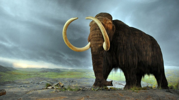 Hi-852-woolly-mammoth