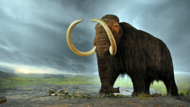 Woolly-mammoth-model-at-the-royal-bc-museum
