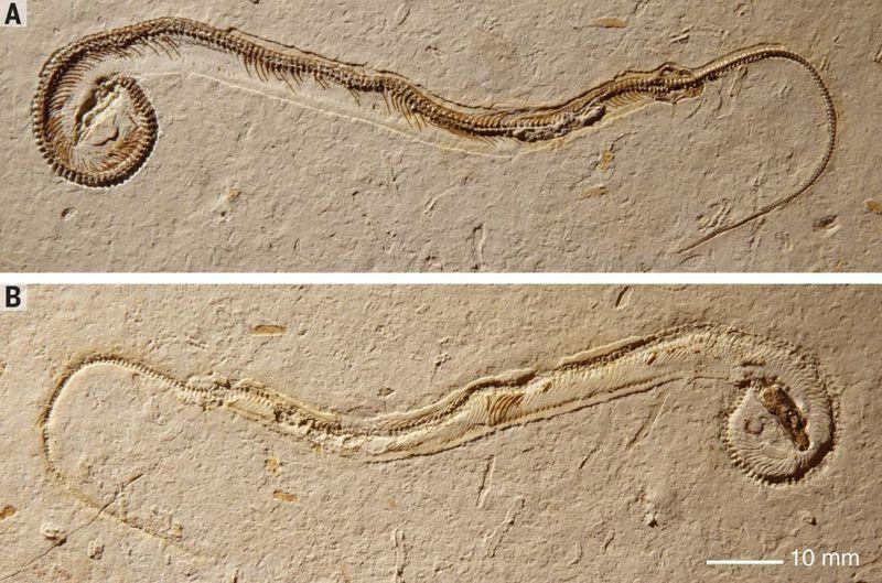 4 legged Snake