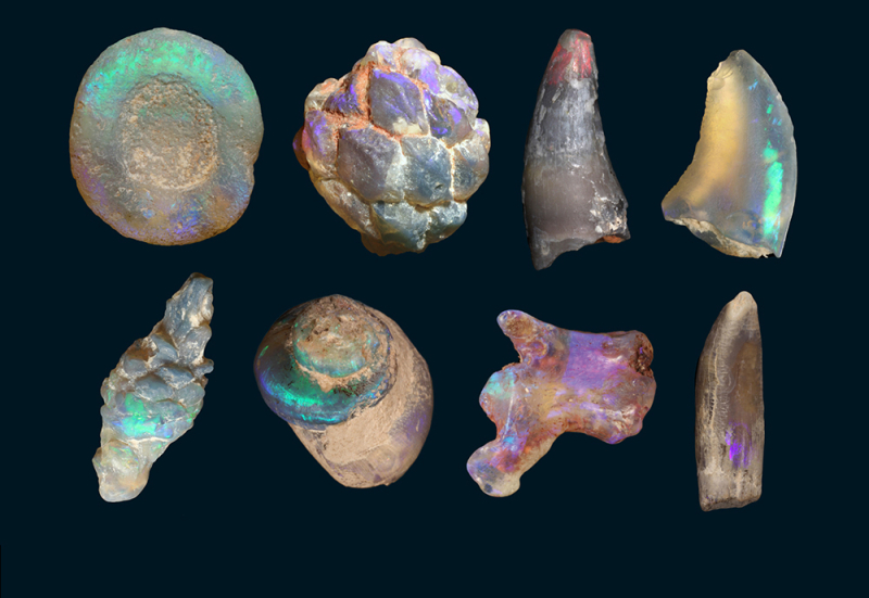 Opalised-fossils2