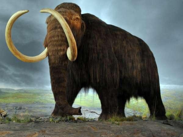 Woolly_mammoth_bfi