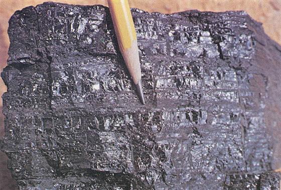 Coal-specimen