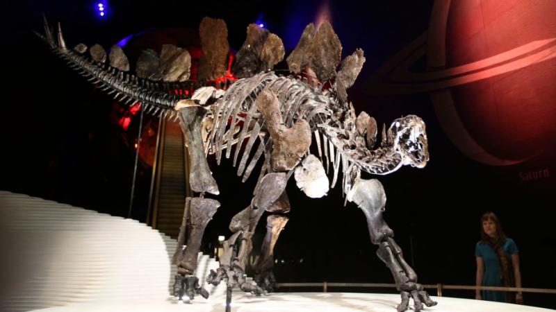 Stegosaurus-natural-history-museum
