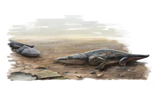Britain-super-salamander