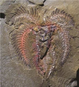 Marellamorph