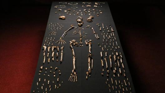 Homo Naledi 2