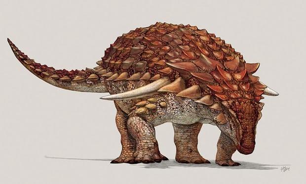 Ankylosaur Coloring