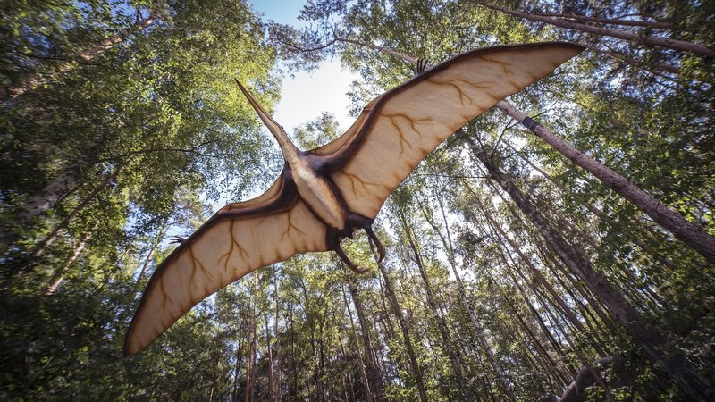 Pterosaur-flexablity