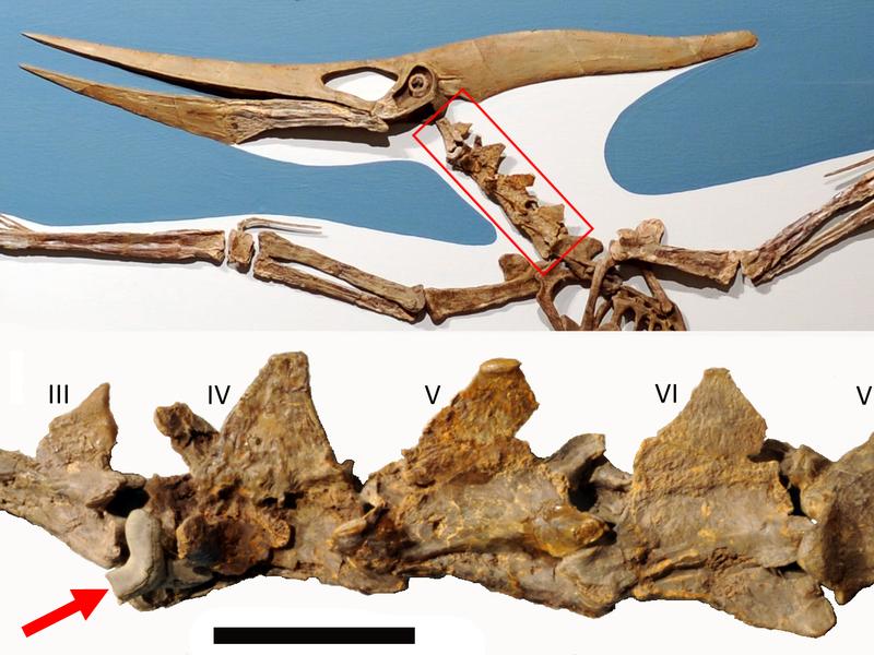 Shark-pterosaur