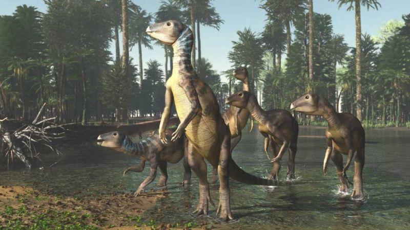 Weewarrasaurus