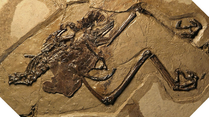 Bird and egg fossil
