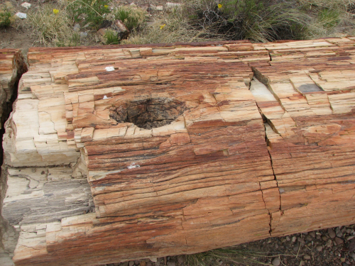Roy petrified forest