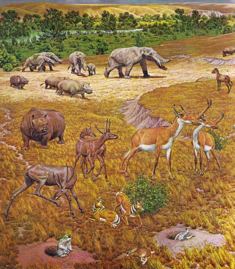N.american-fauna-768x879