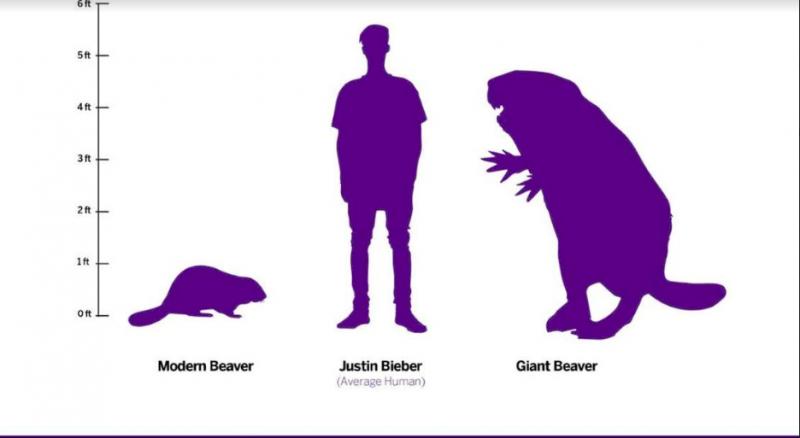 Giant-beaver-skeleton_canadian-museum-of-nature-in-ottawa-2