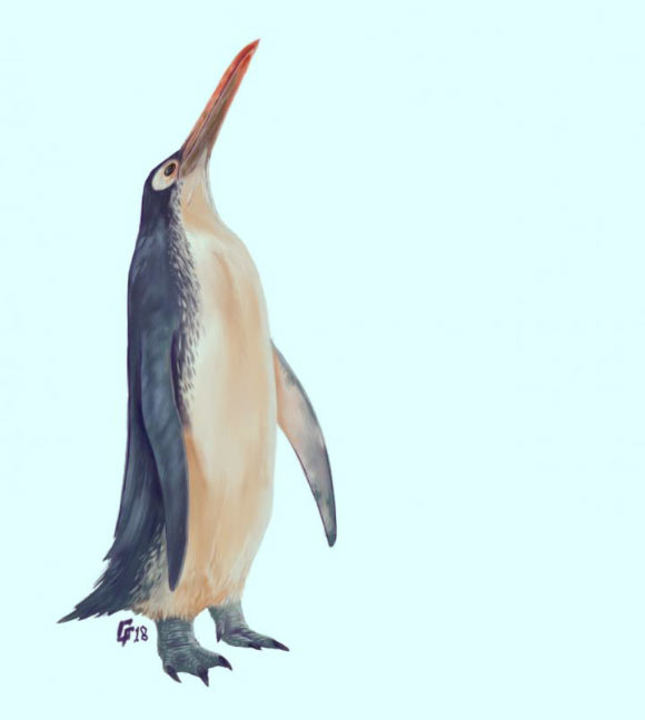 Image_7815-Kawhia-Giant-Penguin