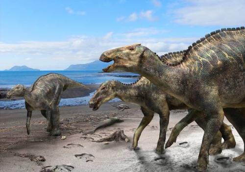 Image_7569_1-Kamuysaurus-japonicus