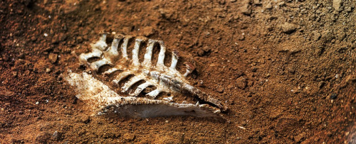 Bones_in_the_soil_corpse_signal_1024