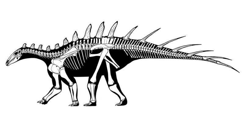 Dacentrurus-armatus-wiki-full-width