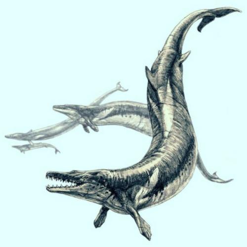 Image_6802_1-Basilosaurus-isis