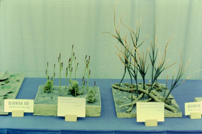 E-9_Plant Life Through The Ages_ESCONI_3-21-1971