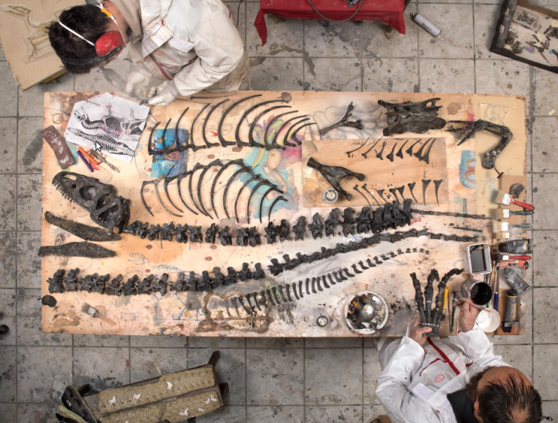 Natgeo fossil collectors