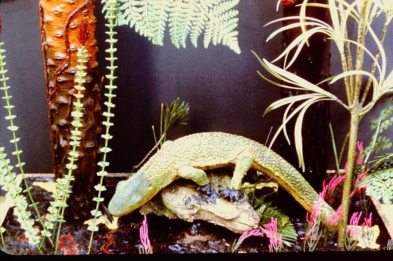 Slide 47_Plant Life with Amphibian-ESCONI