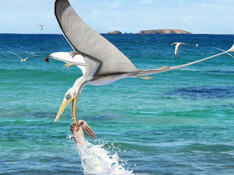 120519_jp_pterosaur-squid_feat-1028x579