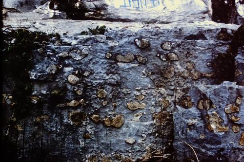 7_Rosiclare trip_Cave-in-Rock limestone_4-25-1958