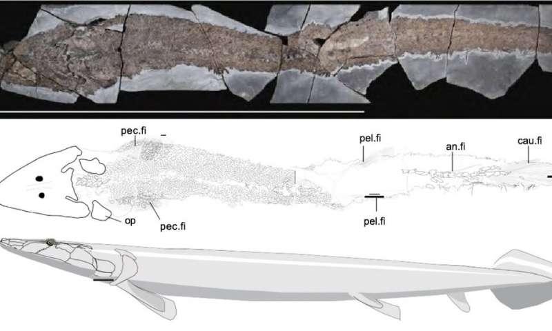 Ancientfishf