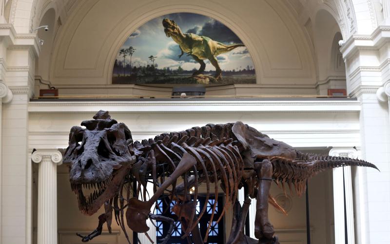SUE in old exhibit
