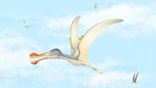 Pterosaur_2_1_Morocco