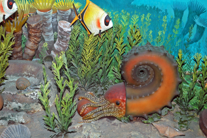 Diorama_of_a_Pennsylanian_seafloor_-_Amphicentrum_fish _Tainoceras_nautiloid _Trigonotreta_brachiopods _algae_(45642214411)