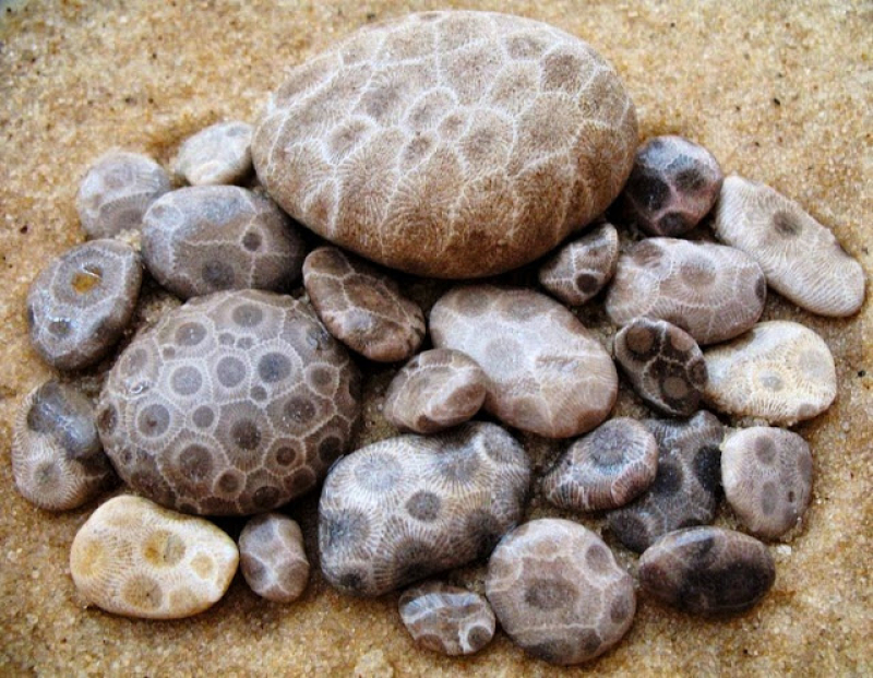 What is Petoskey stone  and Where Can I Find It