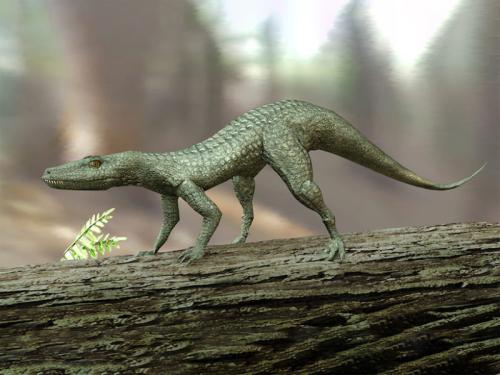 Hesperosuchus-800x600