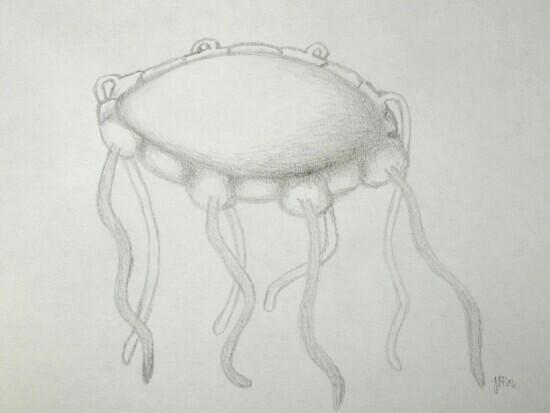 Octomedusa