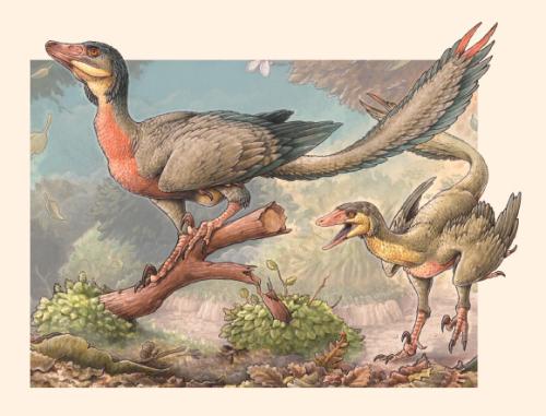 Image_8517_1-Overoraptor-chimentoi