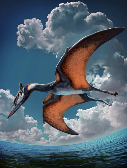 Image_8976_1-Ordosipterus-planignathus