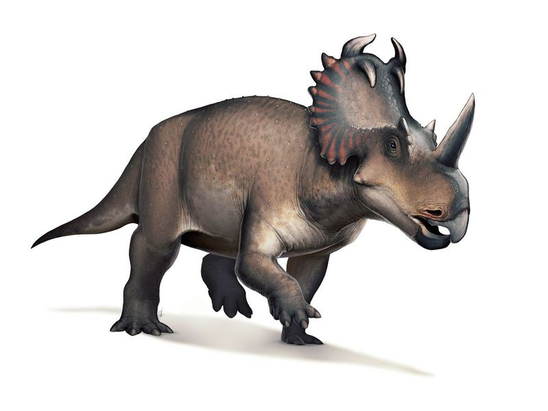Centrosaurus_web