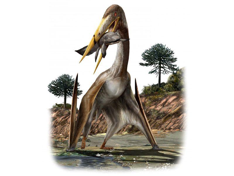 15-pterosaurwide