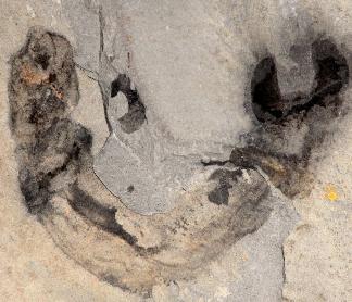 Sea Worm fossil.jpg