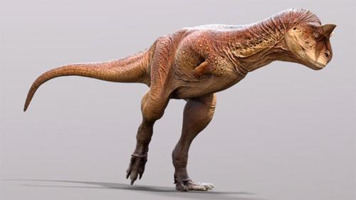 Image_10056_1-Carnotaurus-sastrei